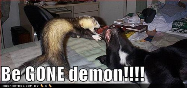 funny-weasel-pictures
